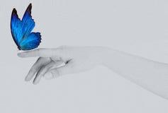 Farfalla sulla mano della donna. Nel moto Fotografie Stock
