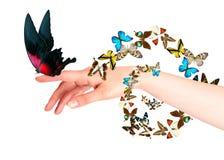 Farfalla sulla mano della donna. Nel moto Immagini Stock