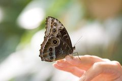 Farfalla sulla mano umana Immagine Stock Libera da Diritti