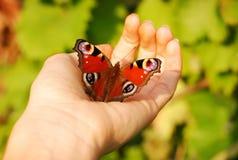 Farfalla sulla palma Fotografia Stock Libera da Diritti