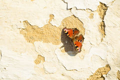 Farfalla sulla parete Fotografie Stock Libere da Diritti