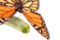 Farfalla sulla pianta di vera dell'aloe Fotografia Stock