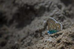 Farfalla sulla spiaggia Fotografia Stock