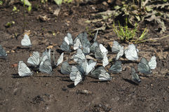 Farfalla sulla strada Fotografia Stock Libera da Diritti