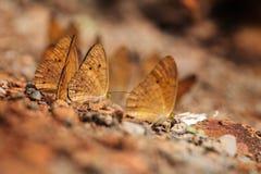 Farfalla sulla terra fotografie stock libere da diritti