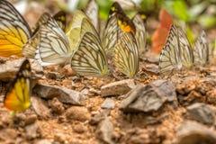 Farfalla sulla terra immagini stock