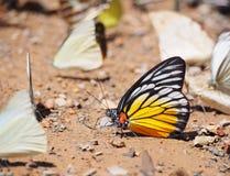 Farfalla sulla terra Immagini Stock Libere da Diritti