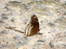 Farfalla sulla terra di pietra Immagini Stock
