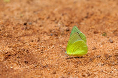 Farfalla sulla terra, fondo marrone Immagine Stock