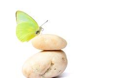 Farfalla sulle pietre equilibrate Fotografia Stock Libera da Diritti