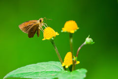 Farfalla Tailandia fotografie stock