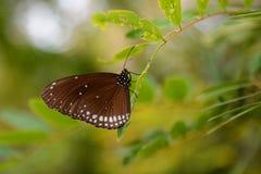 Farfalla tropicale Azienda agricola della farfalla e di Bai Orchid Mae Rim Chiang Mai Province thailand immagine stock