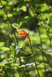 Farfalla tropicale fra fogliame Fotografie Stock