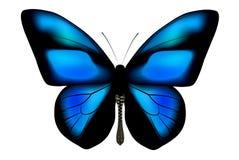 Farfalla Ultramarine Fotografia Stock Libera da Diritti