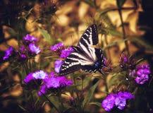 Farfalla in un giardino Immagine Stock Libera da Diritti