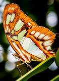 Farfalla variopinta fotografie stock libere da diritti