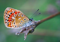Farfalla variopinta immagine stock libera da diritti