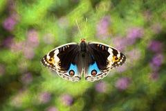 Farfalla variopinta con fondo confuso Fotografie Stock Libere da Diritti