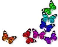 Farfalla variopinta della priorità bassa Immagine Stock