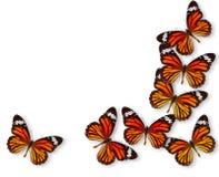 Farfalla variopinta della priorità bassa Immagini Stock