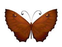 Farfalla variopinta di vettore Fotografia Stock Libera da Diritti