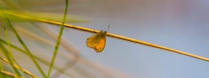 Farfalla variopinta in un prato della molla Fotografia Stock