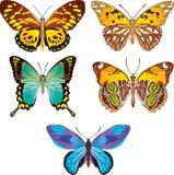 Farfalla variopinta. Vettore Fotografie Stock Libere da Diritti
