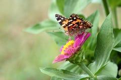 farfalla verniciata della signora Fotografia Stock Libera da Diritti