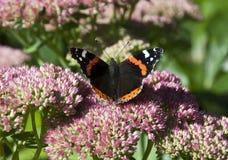 Farfalla vibrante su un fiore Immagini Stock