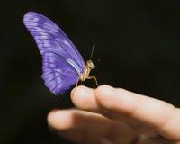 Farfalla viola Fotografia Stock Libera da Diritti