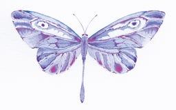 Farfalla viola di fantasia Immagine Stock Libera da Diritti