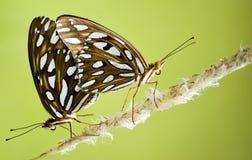 Farfalle Immagine Stock Libera da Diritti