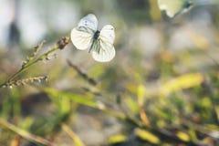 Farfalle bianche che circondano sopra la spiaggia di sabbia Fotografia Stock