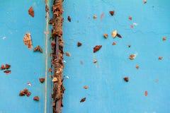Farfalle blu Immagine Stock