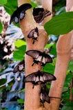 Farfalle che aspettano decollo immagine stock libera da diritti
