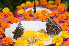 Farfalle che mangiano le arance dal piatto nel giardino Fotografia Stock Libera da Diritti