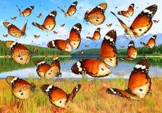 Farfalle che sorvolano i prati fotografie stock
