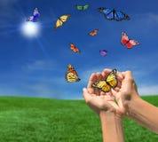 Farfalle che volano all'aperto verso il Sun Fotografia Stock