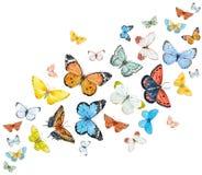 Farfalle dell'acquerello messe illustrazione vettoriale