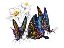 Farfalle dell'acquerello messe isolate su fondo bianco Immagine Stock