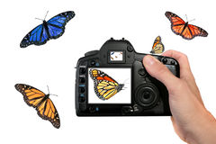 Farfalle della fucilazione del fotografo nell'aria Immagine Stock Libera da Diritti