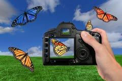 Farfalle della fucilazione del fotografo nell'aria Immagini Stock Libere da Diritti