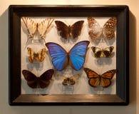 Farfalle della pagina Fotografia Stock Libera da Diritti