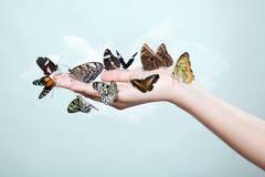 Farfalle della tenuta della mano Fotografie Stock Libere da Diritti