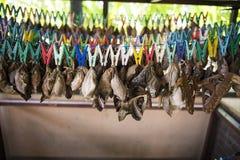 Farfalle di allevamento Immagine Stock