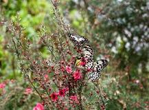 Farfalle di carta del cervo volante (idea l Immagine Stock Libera da Diritti