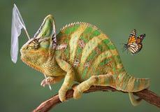 Farfalle di cattura del Chameleon Fotografie Stock