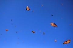 Farfalle di monarca, Michoacan, Messico immagini stock libere da diritti