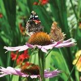 Farfalle e fiori Fotografia Stock