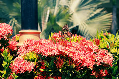 Farfalle e fiori fotografie stock